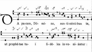Image result for Da pacem Domine introit
