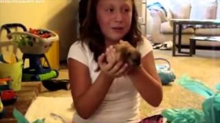 Реакция детей на щенков