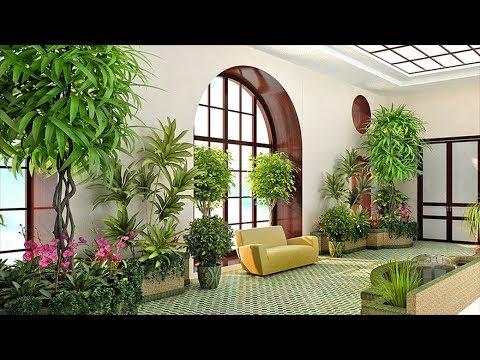 Куда поставить растения? Как правильно разместить комнатные цветы в доме.