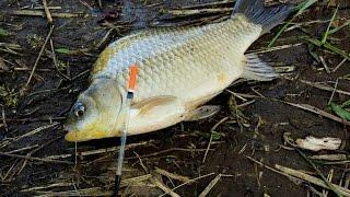 Карась ловля карася на поплавочную удочку (Карась видео) / fish – MF №61