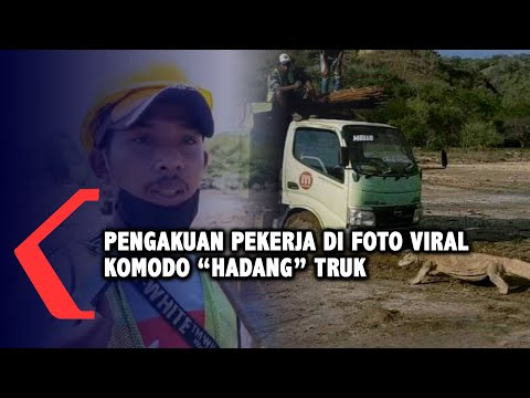 pengakuan pekerja di foto viral komodo hadang truk di pulau rinca
