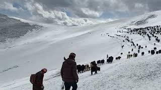 Happy New Year From Taste Tibet