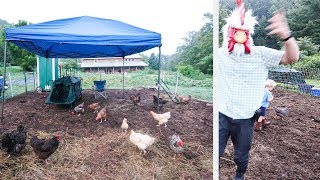 I Lived With Chickens for 24 Hours