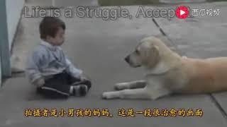 奇迹的拉布拉多犬,改变了连母亲都不能碰触的自闭症孩子