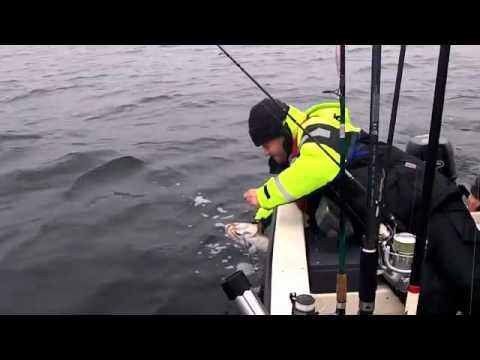 Dorsche angeln in der Ostsee vor Neustadt