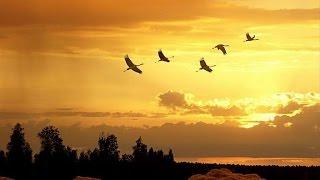 песня---Люблю Сибирский Край...