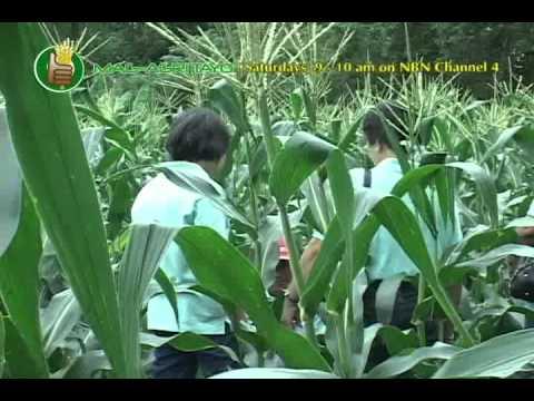 Kung paano ituring ang paa halamang-singaw sa Tsina
