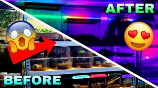 NEW LIGHTING For My HUGE Reptile Room! (CRAZY EFFECTS)