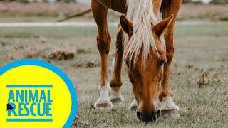Animal Rescue - Season 2, Episode 1