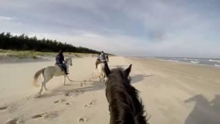 Jazda konna nad morzem / Horse riding by the sea