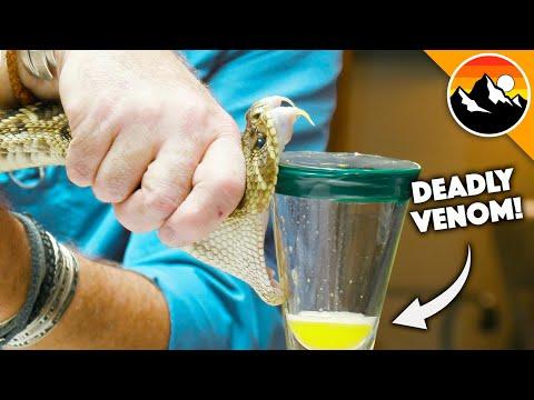 超危險職業 - 蛇毒汲取師