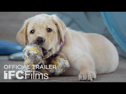 Pick of the Litter Documentary Trailer