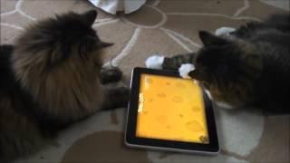 Студент из Австралии создал ряд видеоигр специально для котов