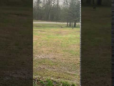 Video Of Bridgestone Centennial Wldrns, TN