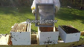 Splitting a Strong Hive - Almost  Too Late - Finding the Queen with Excluder Shaker Box