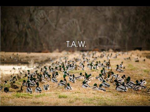 "HW 3.6 ""T.A.W."""