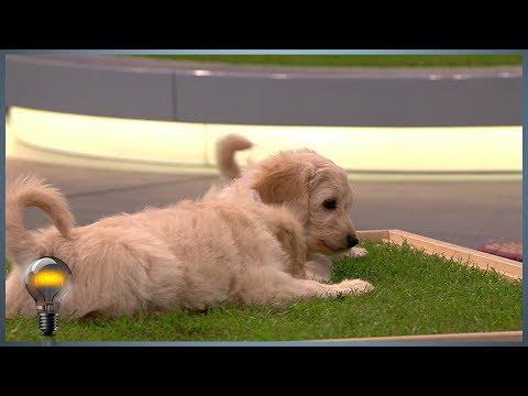 Carnilo - das Indoor-Hundeklo - Das Ding des Jahres