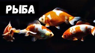 К чему сниться рыбалка и много рыбы