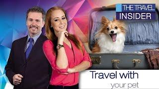 Petfriendly Destinations In Mexico