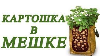 Выращивание картофеля в мешках - НАНО метод посадки картошки. Картошка в мешке.