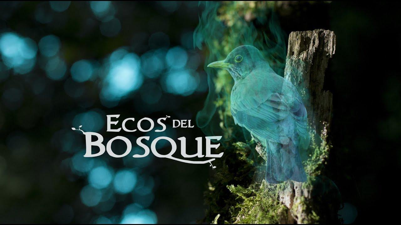 Cortometraje Ecos del Bosque - Proyecto de Título U. MAYOR