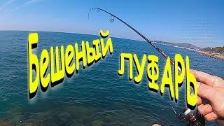 Рыбалка черного моря луфарь