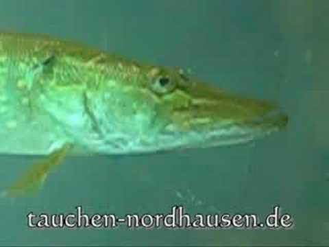Sundhäuser See bei Nordhausen, Sundhäuser See,Nordhausen,Thüringen,Deutschland