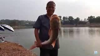Câu cá vớ được chú cá mè dinh gần 2 kg