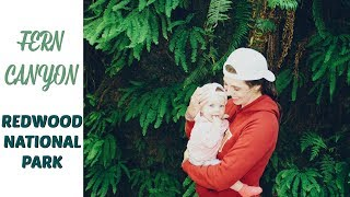 FERN CANYON | Redwood National Park | VLOG