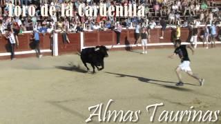 preview picture of video 'Encierros capea Daganzo 17-6 -2012'