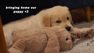 Bringing Home Our Golden Retriever Puppy ❤️