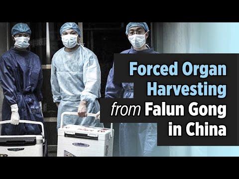Beschuldigingen van gedwongen orgaanoogst in China begonnen in 2006 naar boven te komen.