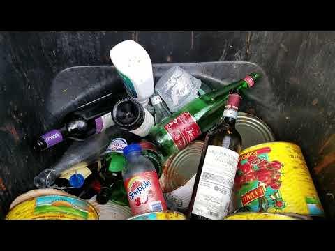 Empty Liquor Bottles Attract Fruit Flies in Rumson, NJ
