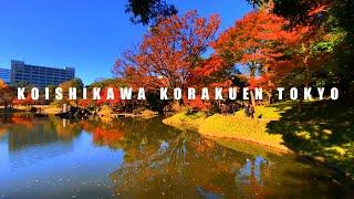 【AUTUMN IN JAPAN 2020】The Best Autumn Leaves Spots In Tokyo: Koishikawa Korakuen