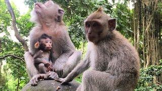 Остров обезьян или где кончается грань! Бали, Азия, Индонезия!