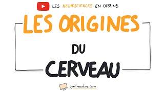 Vignette de VIDÉO Les origines du cerveaux - Les neurosciences en dessins