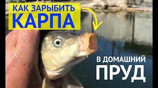 Рыбалка на калитниковском пруду 2020