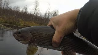 Рыбалка на хариуса поплавок байгол осень