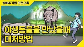 [생활안전] 멧돼지, 고라니! 야생동물을 만났을때 대처 방법