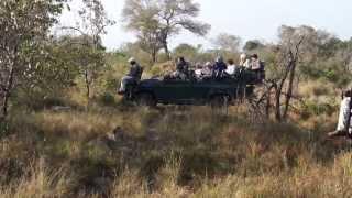 Savanna Plus Safari - Part 2