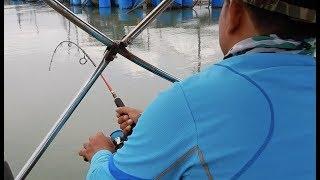 Mancing Pulau Ketam: Ikan tanda, kerapu & Equanimity!