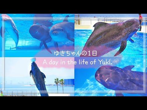 ユキちゃんの1日