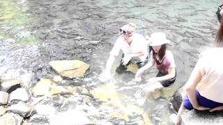 preview picture of video 'Swimming with the fish in Chantaburi, Thailand'