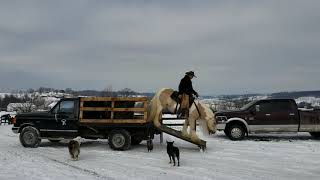 Ringo 7yr.old Reg.Gypsy Vanner gelding offered for sale. Don't Miss a once in a lifetime opportunity