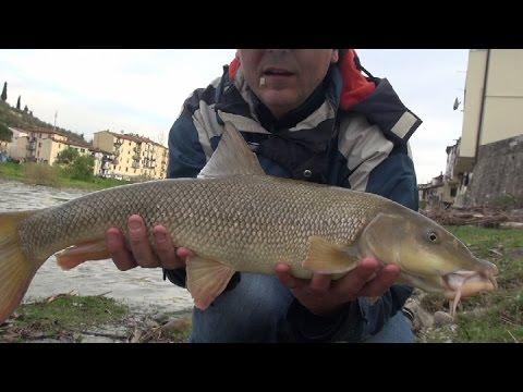 Russo che pesca in 3 Dnieper di battute di entrata zherekh