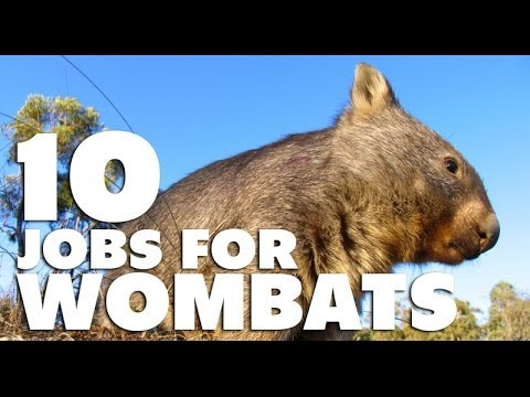 10 zajęć dla wombatów