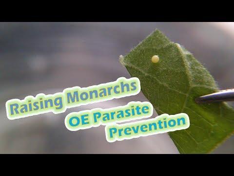Pagkain sa magbunot ng bituka hugas parasito