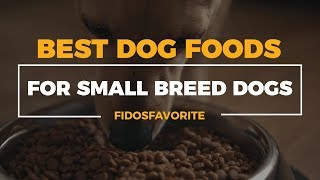 Best Dog Food Brands For Small Breed Dogs |On The Market Today|