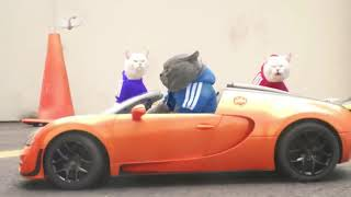 Кот Мурзик  гонка ката