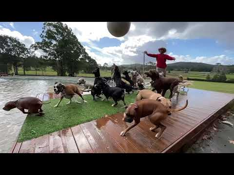 This Doggy Daycare Looks Like Heaven